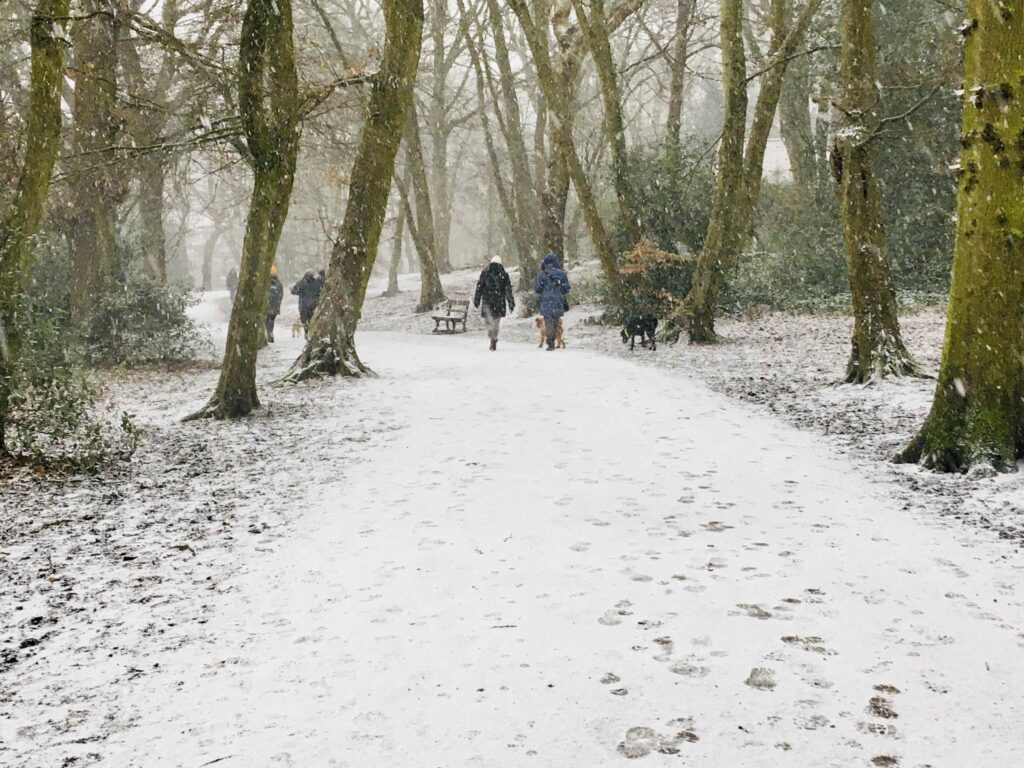 Image of people walking in the woods on a snowy day.