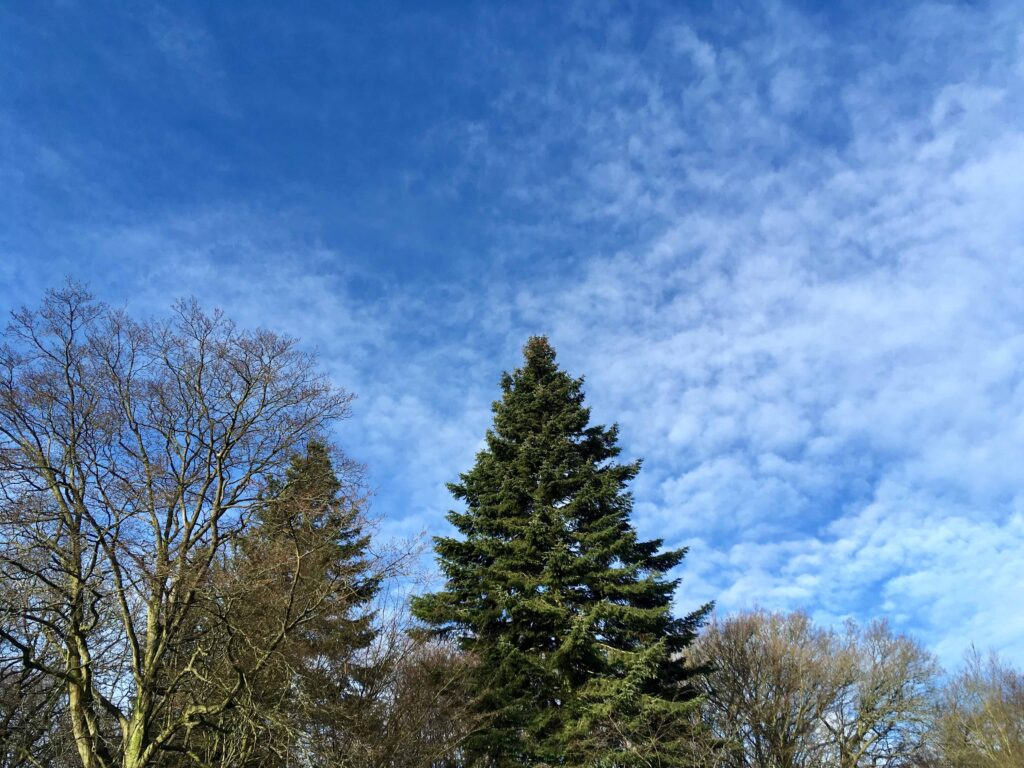 An image of trees in the woods set against the backdrop of blue skies and cloud.